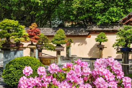 Bonsaimuseum in Seeboden – Urlaub in Kärnten am See – Seevilla Leitner – Ferienhaus am Millstätter See